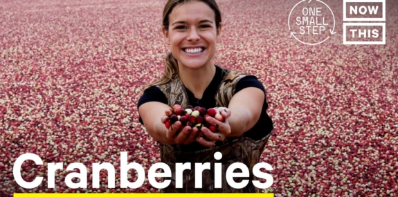 Are Cranberries Good For The Climate?