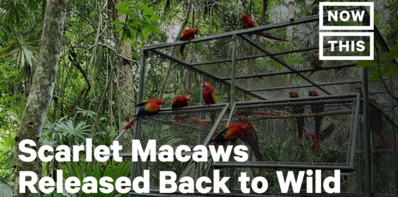 Baby Scarlet Macaws Get Nursed Back to Health