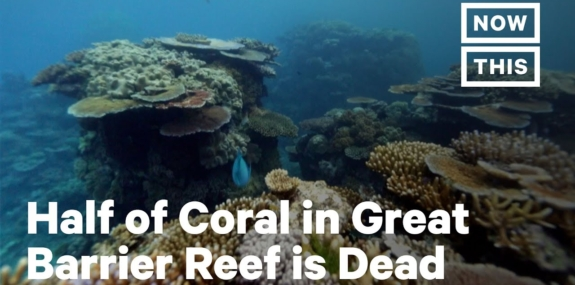 How Ocean Warming Has Killed 50% of Great Barrier Reef's Coral