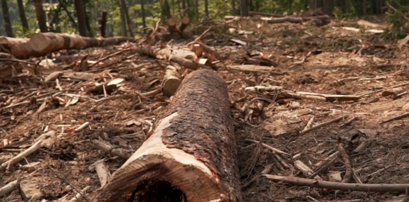 How Deforestation Could Lead to More Pandemics