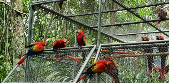 Baby Scarlet Macaws Get Nursed Back to Health
