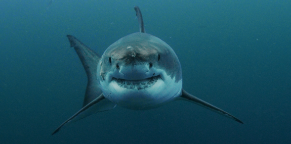 How Your Cosmetics Are Killing Sharks